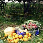 Ensalada de rabanillos, papas nuevas y aguacate