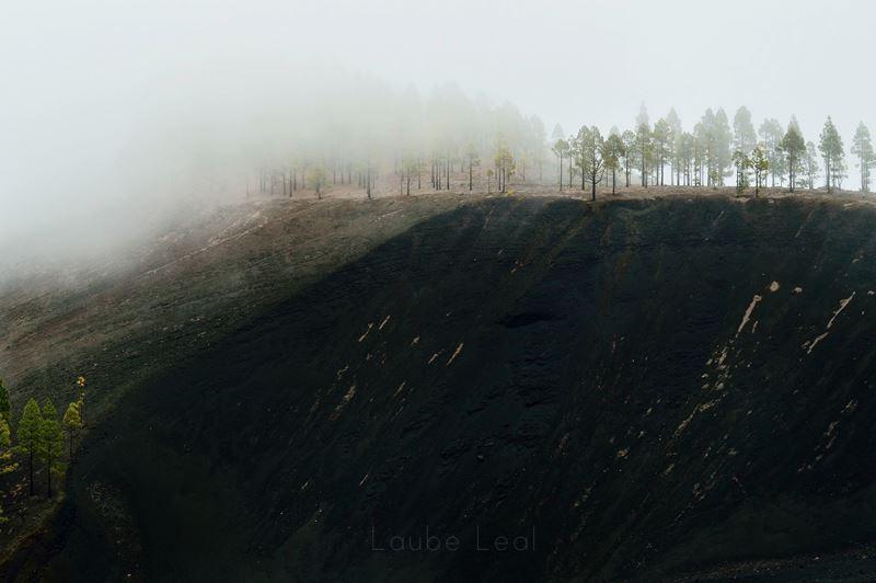 Pinos entre la niebla